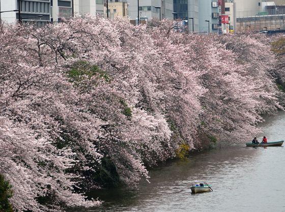外濠公園(千代田区の桜の名所として知られる外濠公園は徒歩圏内にあります)