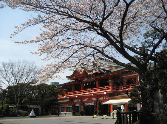 桜の時期には屋外での記念写真も撮影可能です